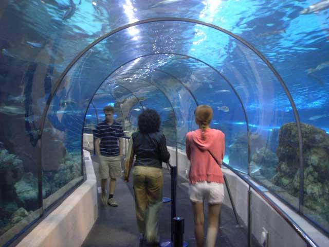 80-метровый тоннель, над головой проплывают жирные акулы с жуткими глазами.